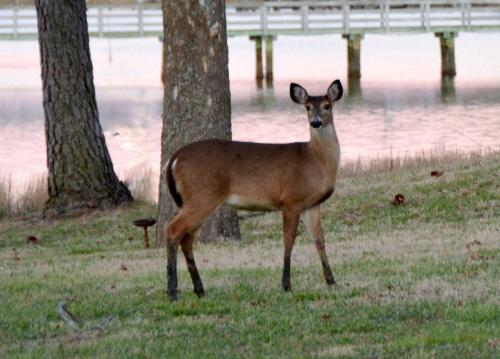 deer  1-19-2014 5-18-35 AM