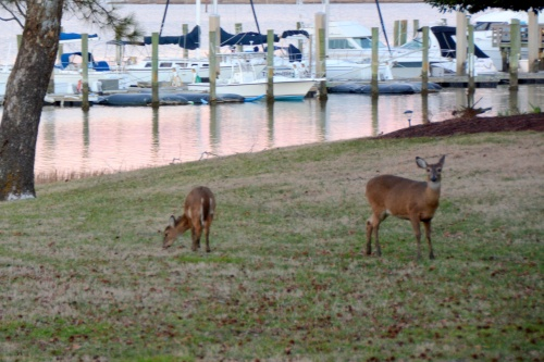 deer and marina 1-19-2014 5-17-50 AM