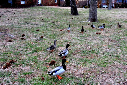 duckies 1-27-2014 4-55-33 PM