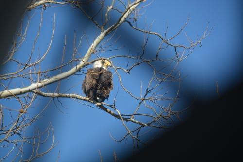 eagle 1-3-2014 10-49-19 PM