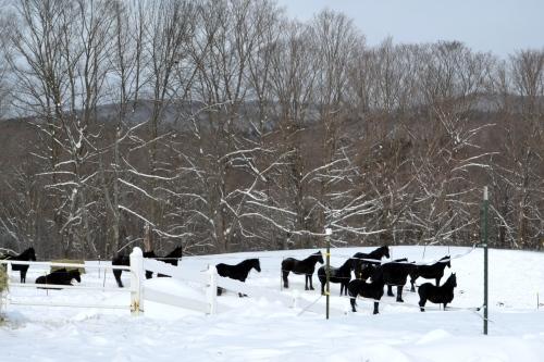 horses in snowa 12-30-2012 11-41-53 AM