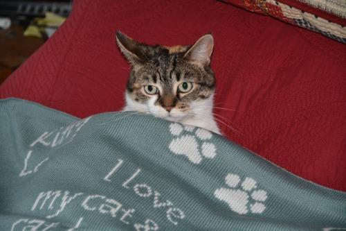 sundae in blanket2 12-27-2013 3-46-34 AM 12-27-2013 3-46-34 AM