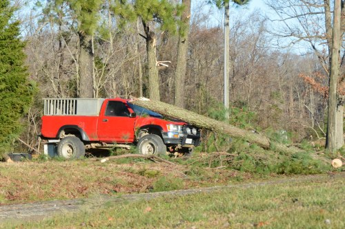 tree on truck. 1-11-2014 8-45-08 PM