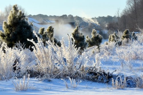 icy trees and shrubs 1-30-2014 8-04-09 AM