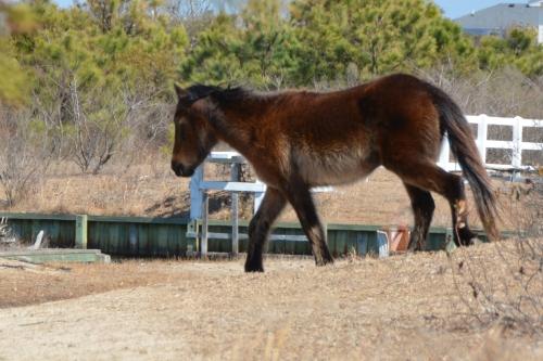 horse 3-15-2014 12-41-21 PM