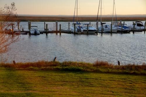 3 egrets herons 4-20-2014 6-42-59 AM