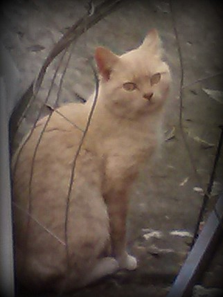 outback kitty 4-1-2014 7-44-34 PM