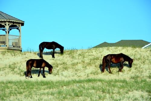 3 horses 5-25-2014 7-27-38 AM