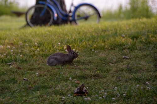 hare and tortoise 5-28-2014 6-34-26 AM