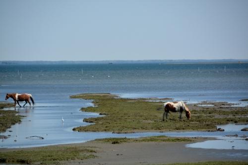 horses wetlands 5-4-2014 11-00-36 AM