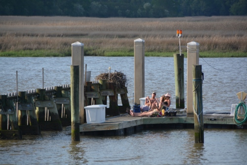 sunbathers and osprey nest 5-4-2014 6-01-34 PM