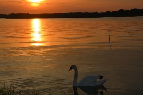 bride swan reflection5-26-2014 7-56-16 PM 5-26-2014 7-56-16 PM