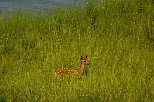 fawn best 7-7-2014 3-54-30 PM