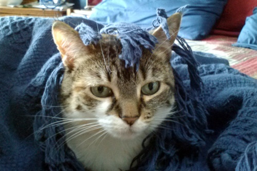 sundae blanket 7-1-2014 3-47-07 PM