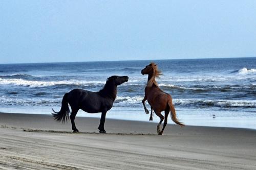 2 stallions 9-1-2013 8-30-017