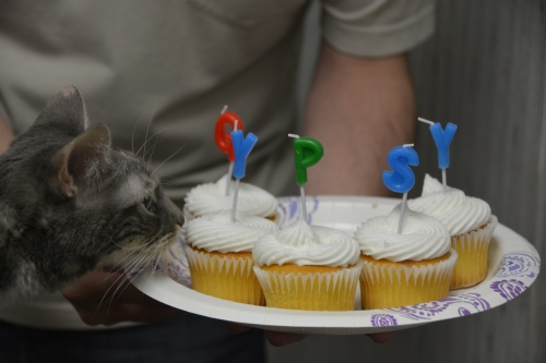 gypsy cupcakes closeup 8-18-2014 10-20-18 AM