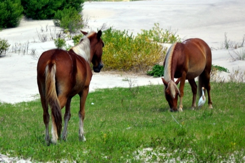 horses in grass 8-11-2013 12-01-057