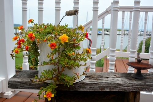 purslane in coffeepot and mini birdbath 8-9-2014 12-47-22 PM
