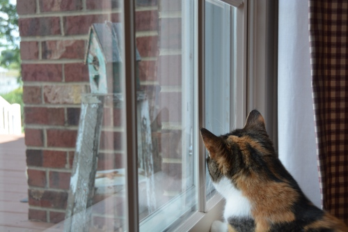 sundae looking at wrens 8-25-2014 3-02-33 PM