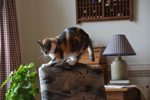 sundae on chair 8-1-2014 3-45-10 PM