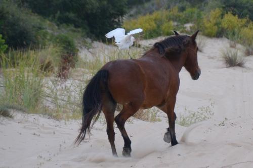 egret 8-30-2014 8-20-06 AM