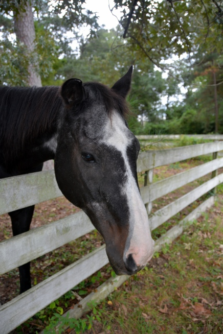 horse and fence 9-13-2014 1-34-42 PM