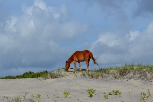 horse and sea oats 6-23-2013 9-06-51 AM