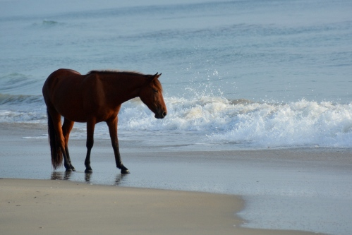horse in water 9-5-2014 7-52-19 AM