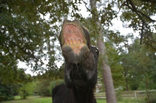 horse teeth 9-13-2014 1-33-23 PM