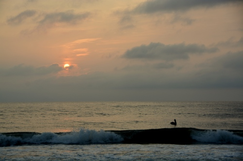 sun and pelican 8-21-2014 6-44-33 AM