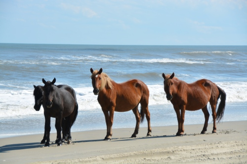 4 horses 10-4-2014 1-35-20 PM