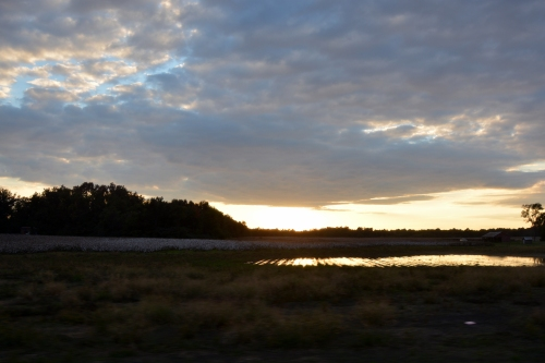cotton field at sunset 10-18-2014 6-00-23 PM