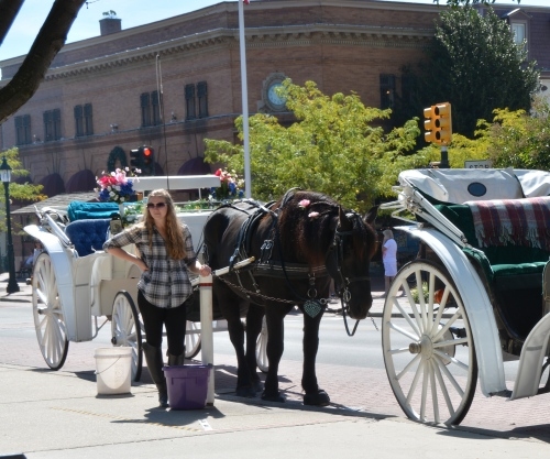 devon horse and carriages 9-28-2014 12-34-30 PM