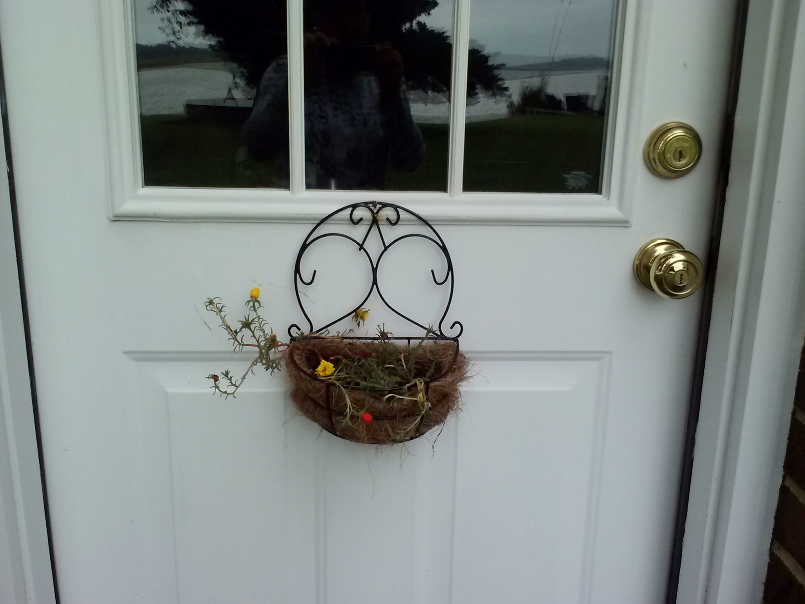 hanger on door 9-25-2014 2-19-45 PM & squirrel stashing walnut in flower planter | these days of mine