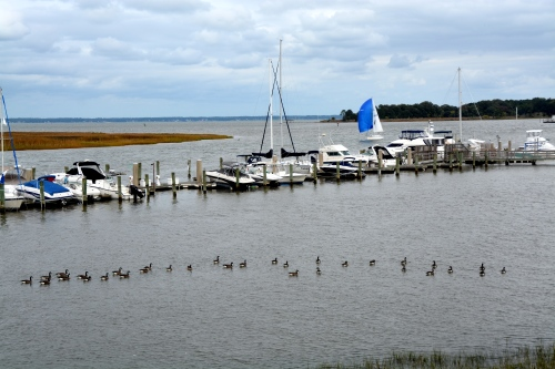 sailboat and geese 10-12-2014 3-46-33 PM