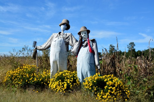 scarecrows best 10-20-2014 2-51-35 PM