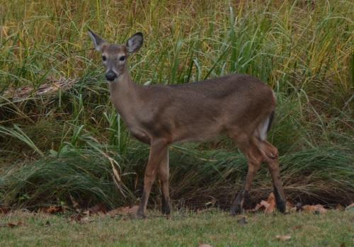 deer3 11-6-2014 4-14-58 PM