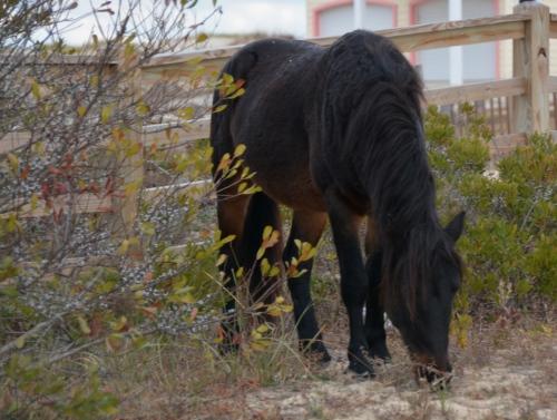 horse2 11-15-2014 9-30-24 AM