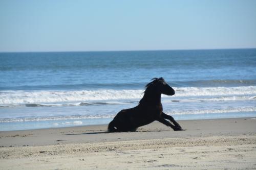 horse rising 12-27-2014 1-04-03 PM
