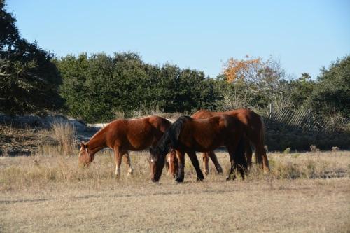 horses 11-28-2014 8-53-12 AM