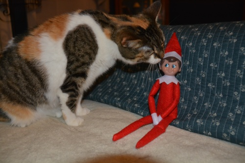 sundae and elf 2 12-3-2014 9-38-50 PM