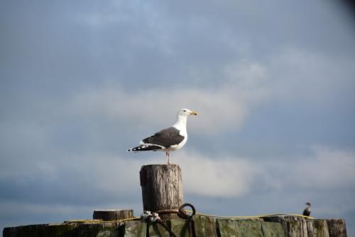 seagull 1-18-2015 2-42-30 PM