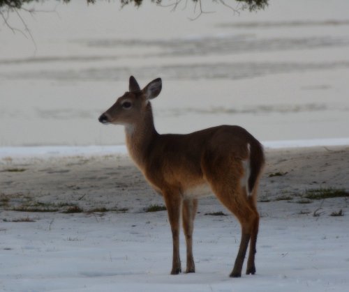 deer best 2-22-2015 5-07-58 PM