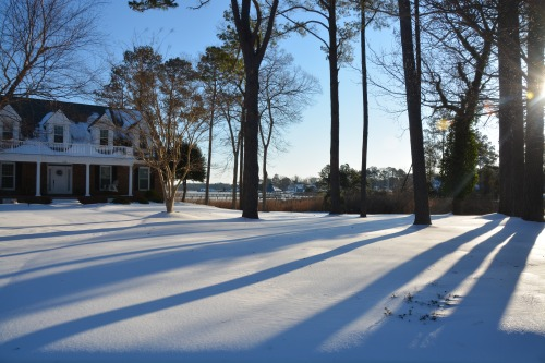 front yard 2-19-2015 7-58-19 AM