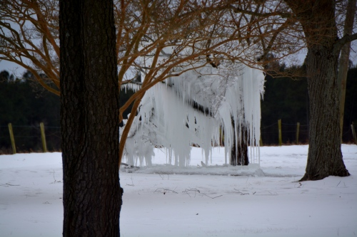 ice tree 1 2-21-2015 2-39-34 PM