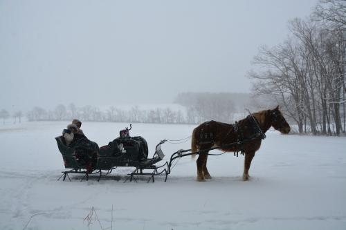 jrdb sleigh silhouette 1-30-2015 2-34-30 PM