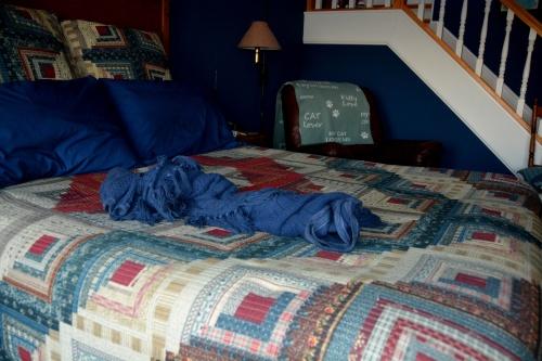 sundae's blanket2 2-8-2015 5-20-08 PM