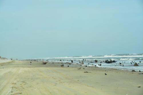beach 2-28-2015 12-39-57 PM