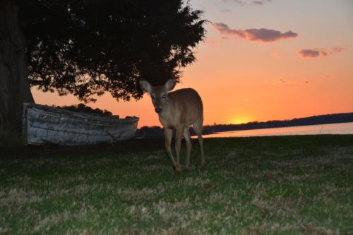 deer1 3-30-2015 7-24-00 PM