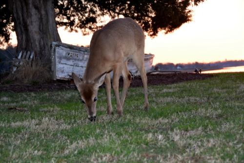 deer2 3-30-2015 7-24-14 PM